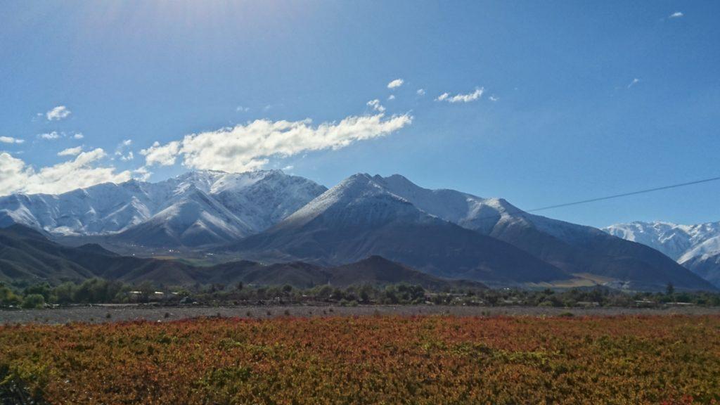 Vignes et montagne Vallee de l'Elqui Chili
