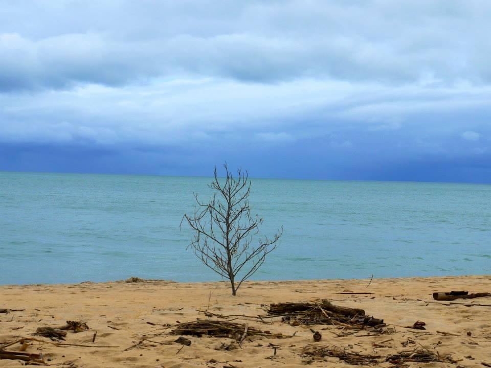 rbre mort sur une plage vide, Sambava, SAVA, Madagascar