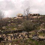 Vignes et rochers, Portugal